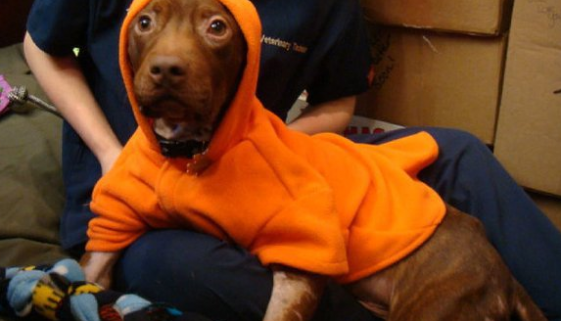 Kristy K. James-Patrick-orange hoodie