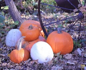 pumpkns and wheel