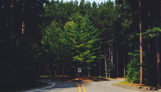 fork-in-road-nature-lines-country-pexels